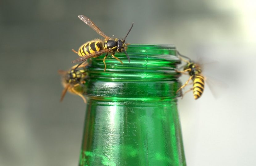 guepe sur une bouteille